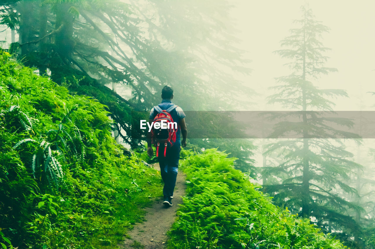 rear view, backpack, walking, real people, adventure, nature, full length, hiking, tree, one person, forest, lifestyles, travel, leisure activity, mountain, beauty in nature, healthy lifestyle, day, men, vacations, outdoors, growth, scenics, young adult, people