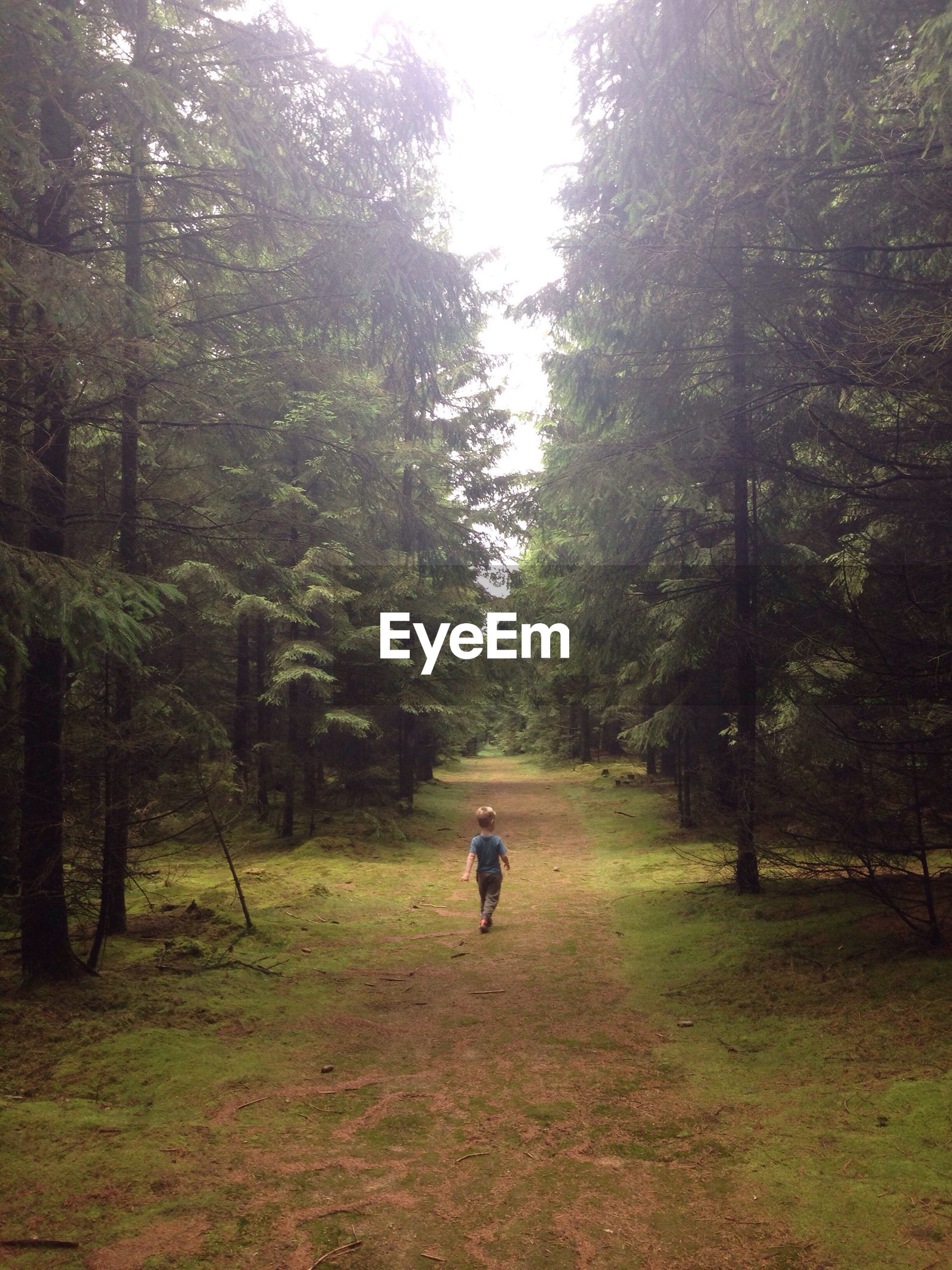 Rear view of boy walking on field in forest