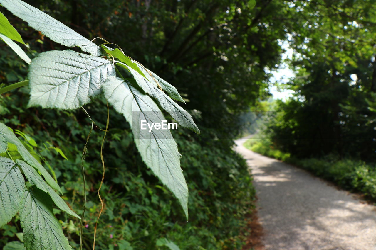 plant, focus on foreground, leaf, plant part, nature, growth, day, close-up, no people, green color, tree, beauty in nature, outdoors, sunlight, tranquility, selective focus, road, white color, land, transportation, leaves