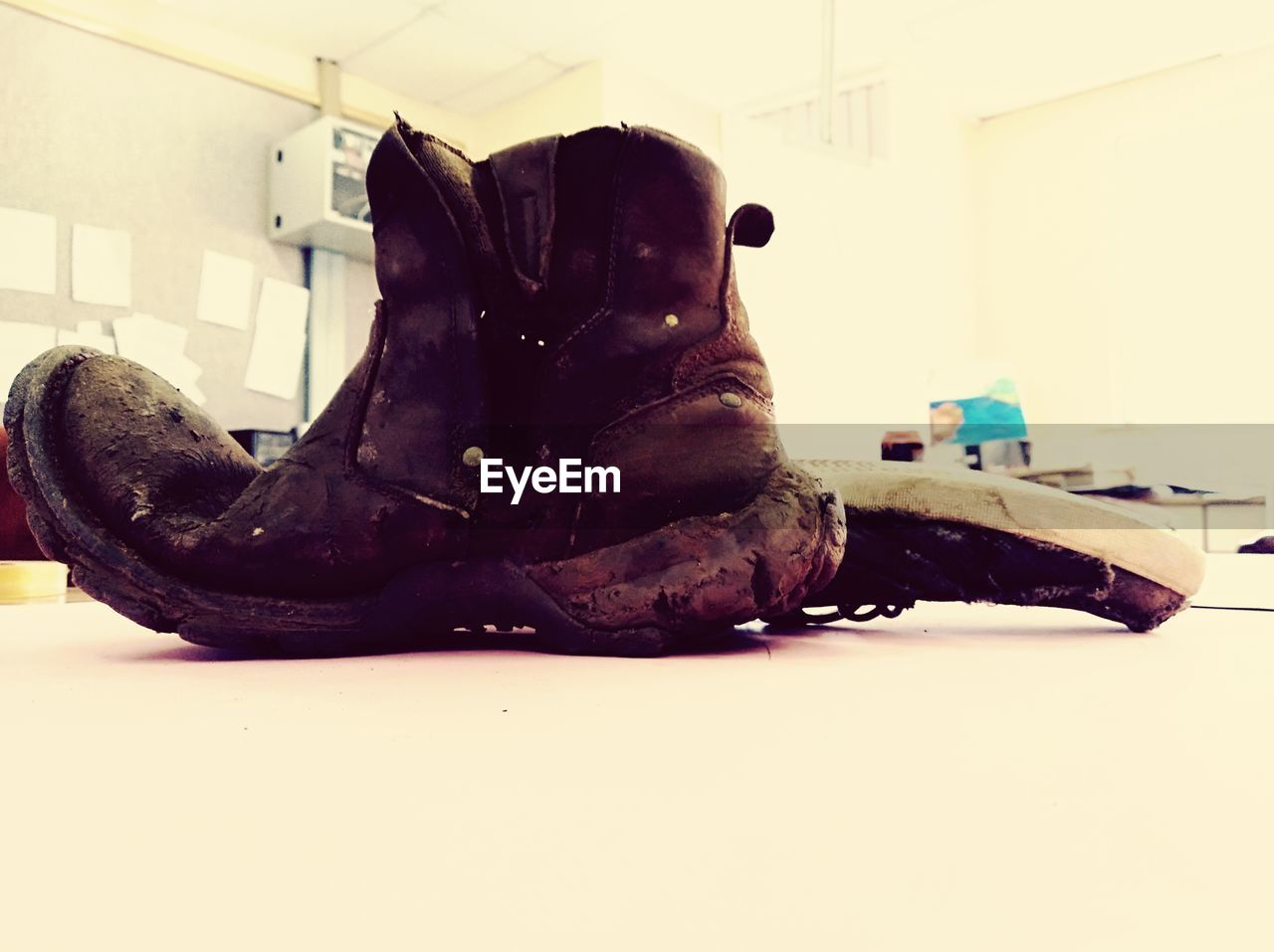 indoors, shoe, relaxation, mammal, boot, close-up, no people, domestic, resting, home interior, pets, lying down, domestic animals, representation, brown, one animal