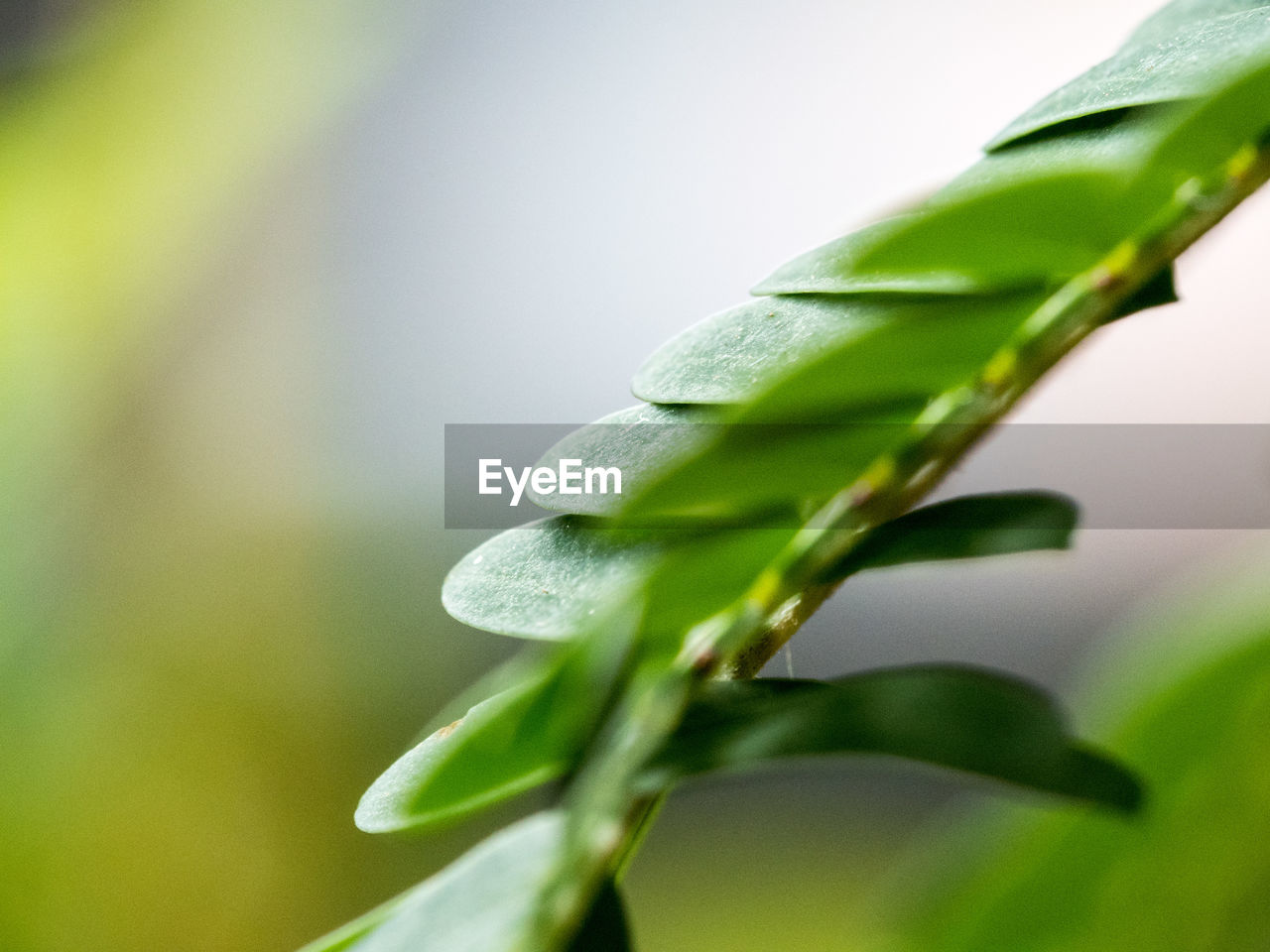 leaf, green color, nature, growth, plant, close-up, beauty in nature, no people, day, fragility, outdoors, freshness