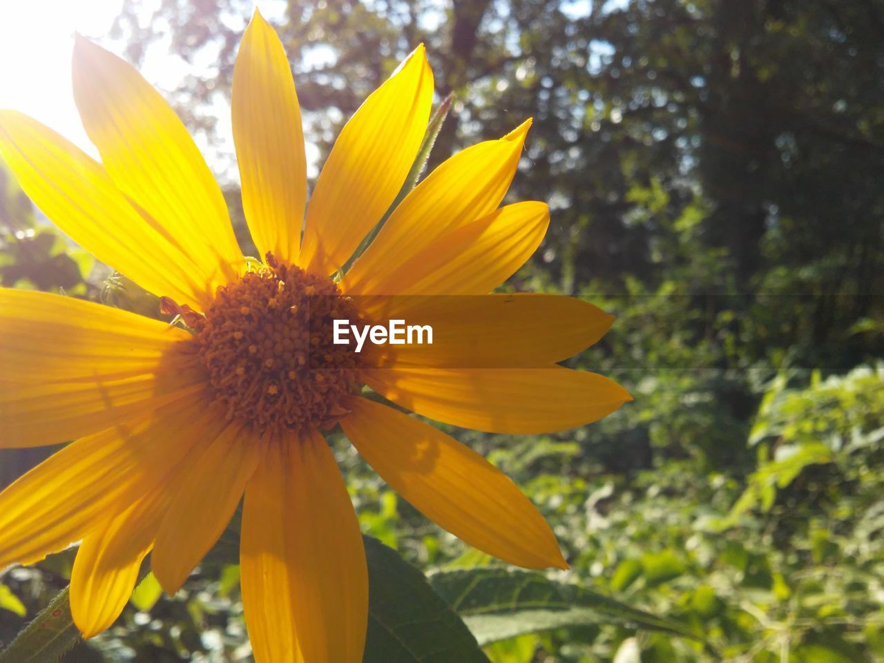 flowering plant, flower, fragility, vulnerability, growth, petal, plant, freshness, beauty in nature, close-up, flower head, inflorescence, yellow, focus on foreground, day, nature, no people, pollen, outdoors, gazania