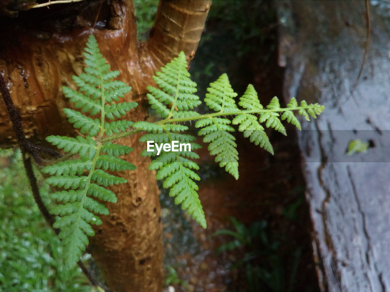 plant, growth, green color, close-up, focus on foreground, nature, no people, leaf, plant part, day, tree, fern, beauty in nature, outdoors, tree trunk, trunk, selective focus, freshness, fragility, branch