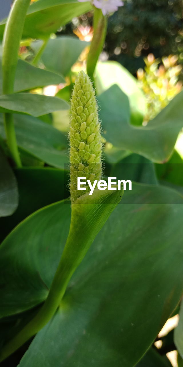 green color, growth, plant, nature, no people, beauty in nature, close-up, outdoors, leaf, day, freshness, fragility