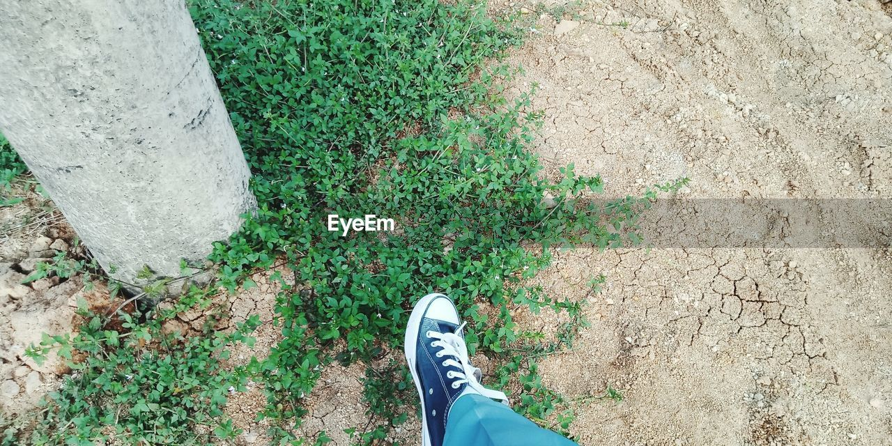 low section, human leg, shoe, personal perspective, human body part, one person, body part, high angle view, standing, plant, day, real people, lifestyles, nature, outdoors, grass, unrecognizable person, green color, land, human foot, human limb, jeans