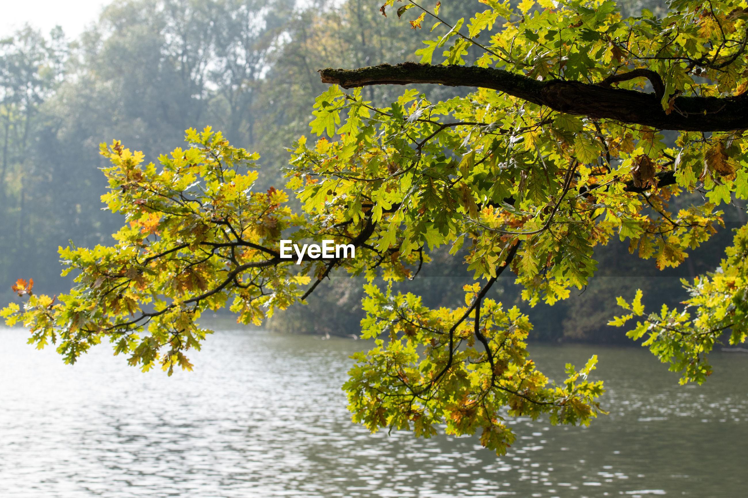 AUTUMN LEAVES ON LAKE