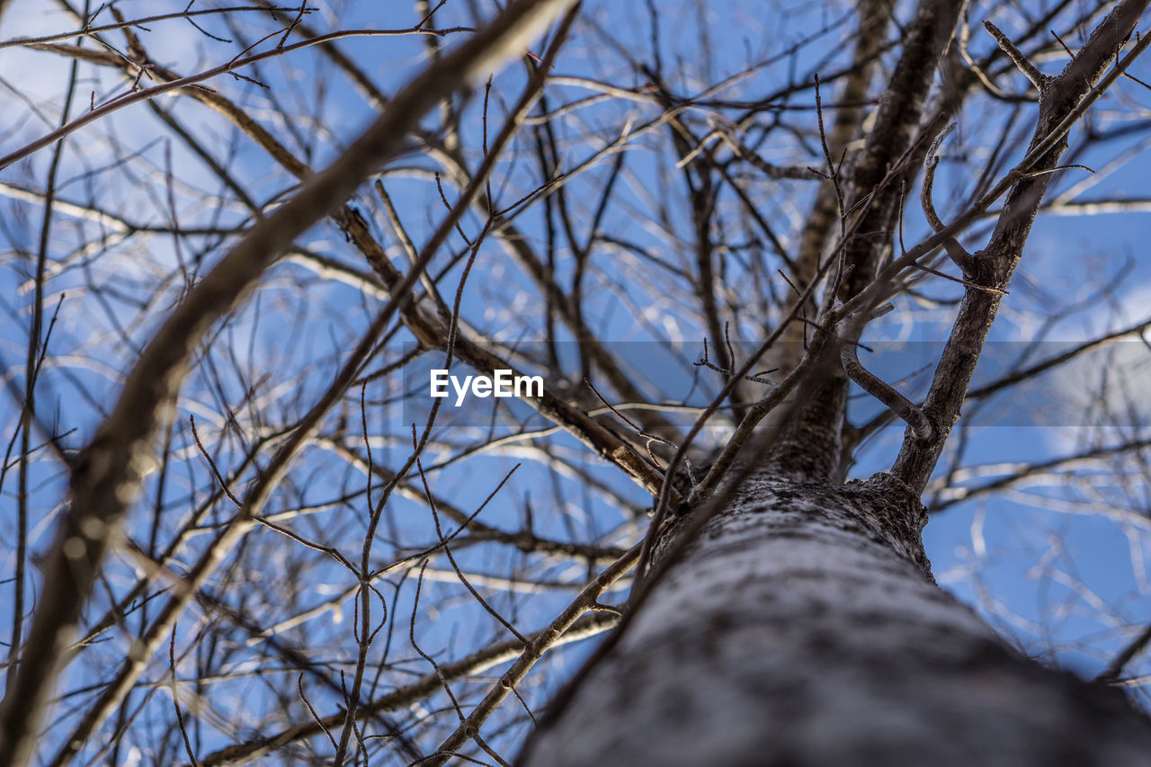 bare tree, branch, tree, selective focus, day, low angle view, dried plant, nature, dead plant, no people, outdoors, beauty in nature, close-up, sky