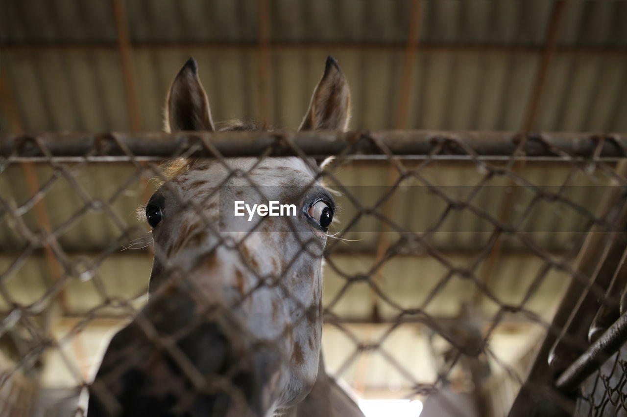 Low Angle View Of Horse Standing In Stable