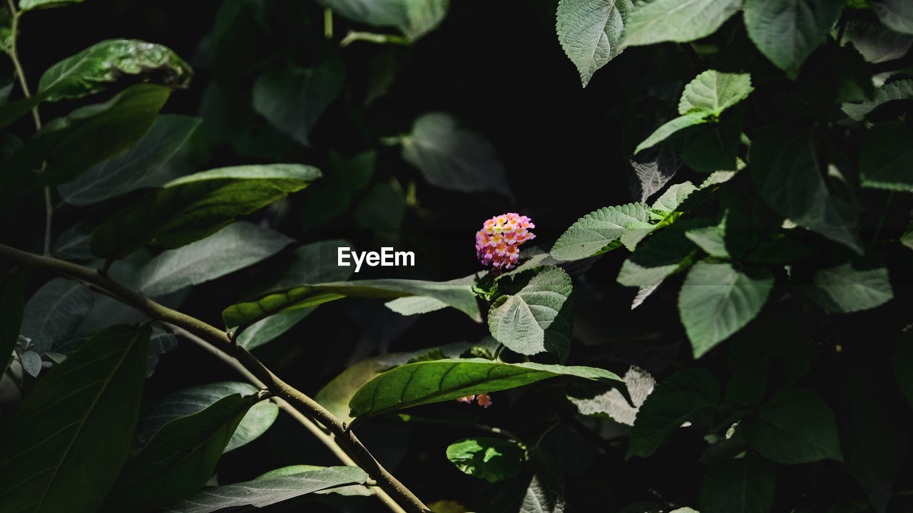 plant, plant part, leaf, growth, flower, beauty in nature, freshness, flowering plant, nature, flower head, close-up, vulnerability, inflorescence, petal, fragility, no people, green color, day, red, outdoors