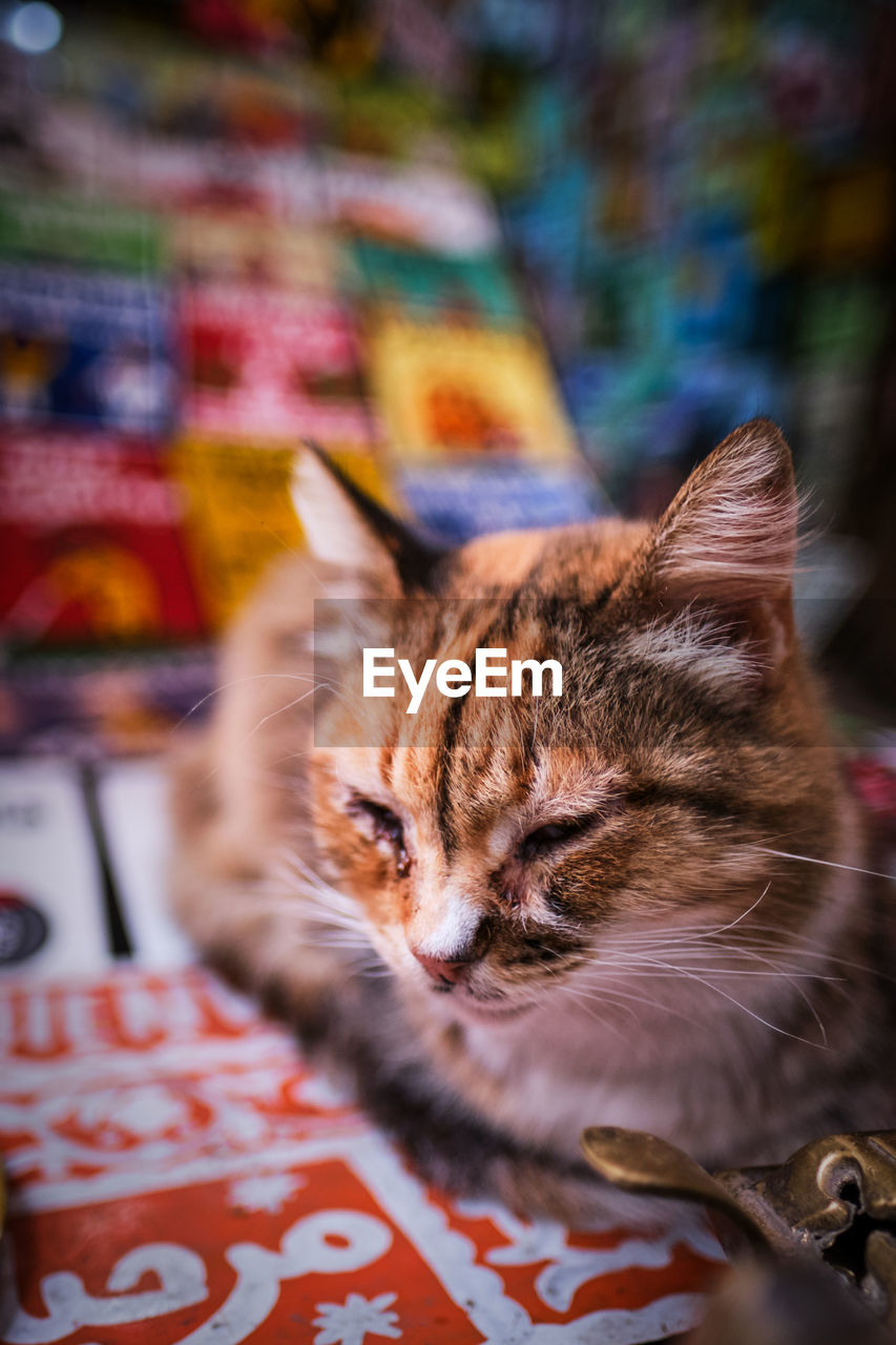 cat, mammal, domestic cat, feline, domestic, animal themes, pets, domestic animals, animal, vertebrate, one animal, relaxation, no people, selective focus, resting, close-up, sleeping, focus on foreground, indoors, eyes closed, whisker, animal head