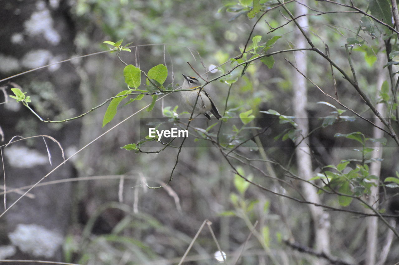 nature, growth, plant, tree, no people, outdoors, beauty in nature, fragility, branch, day, close-up, freshness