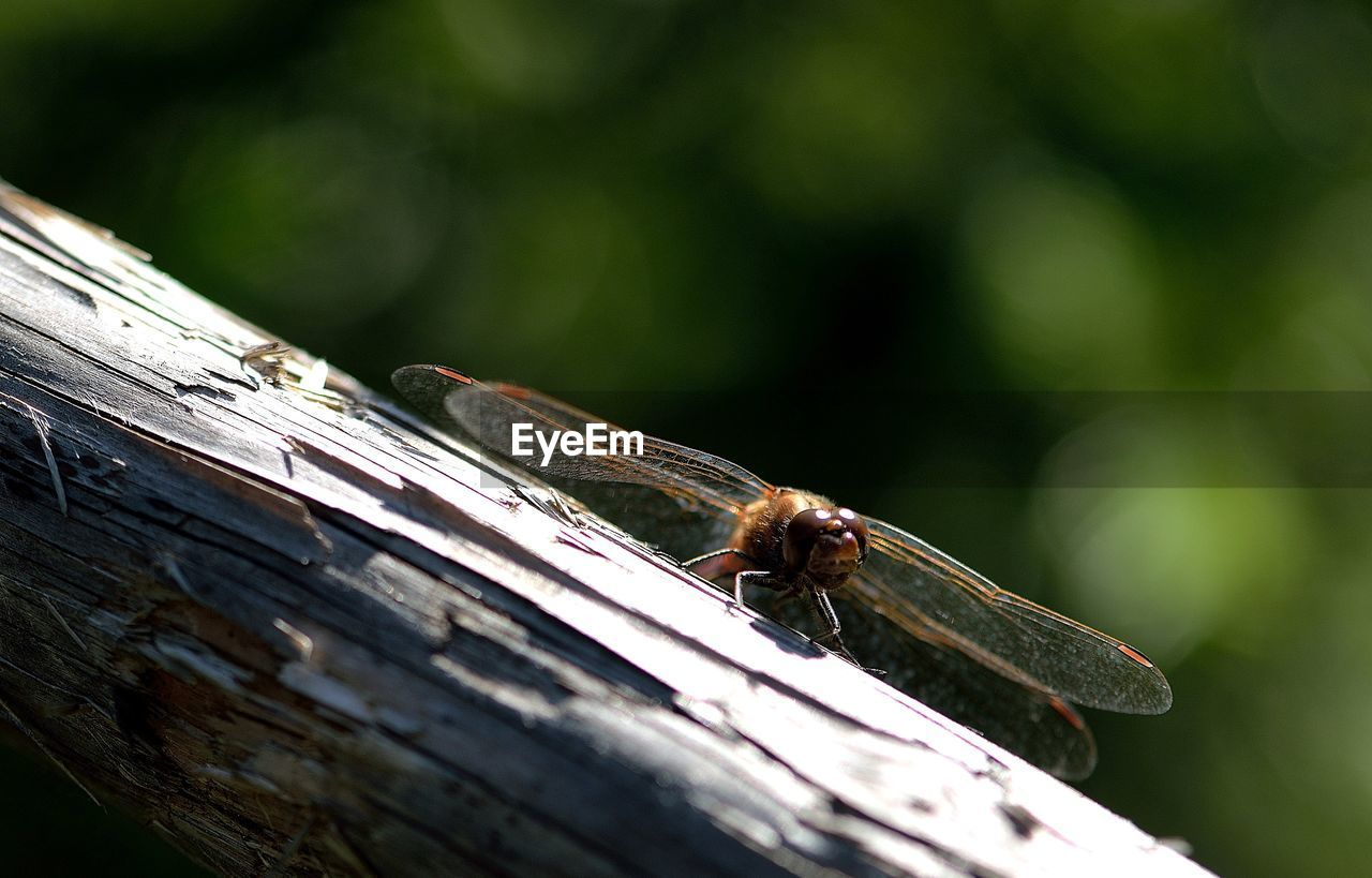 insect, animals in the wild, animal themes, one animal, day, no people, animal wildlife, nature, outdoors, close-up, perching