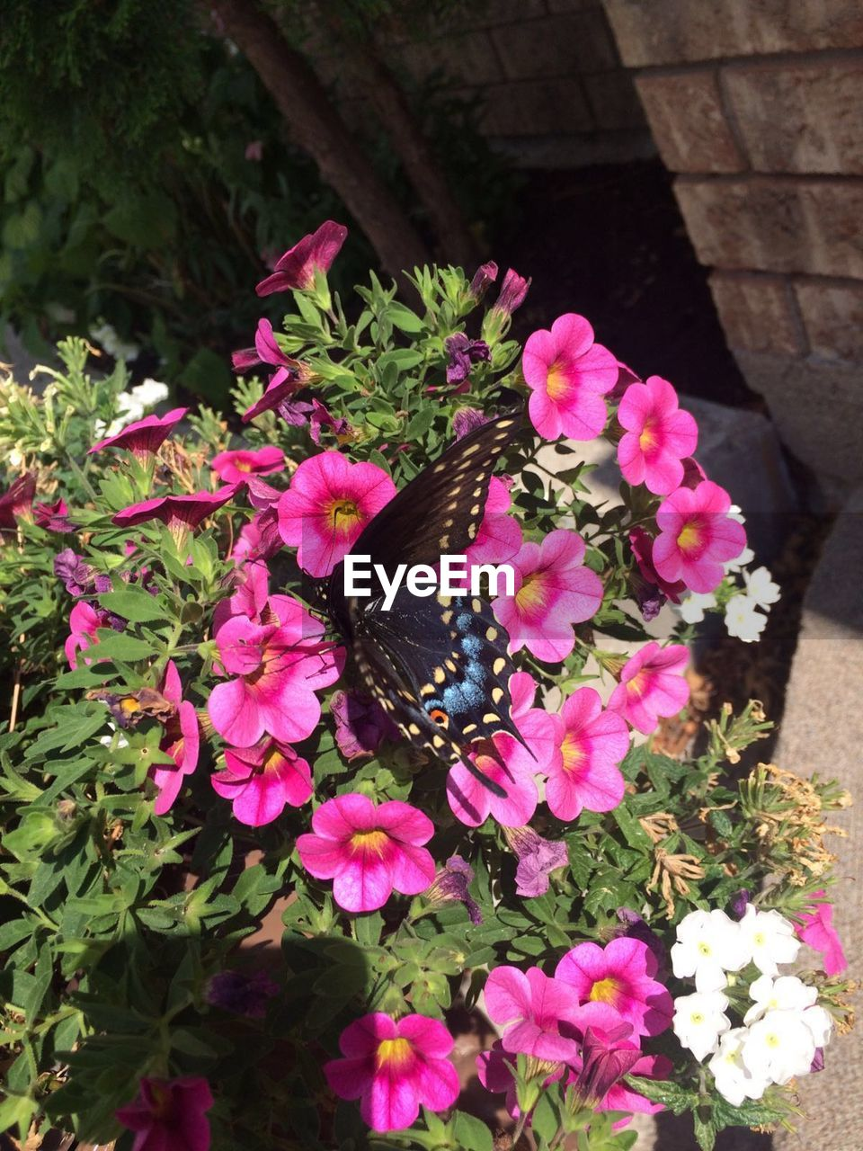flower, growth, nature, one animal, plant, animals in the wild, animal themes, fragility, beauty in nature, petal, outdoors, no people, high angle view, insect, day, butterfly - insect, freshness, butterfly, blooming, flower head, close-up