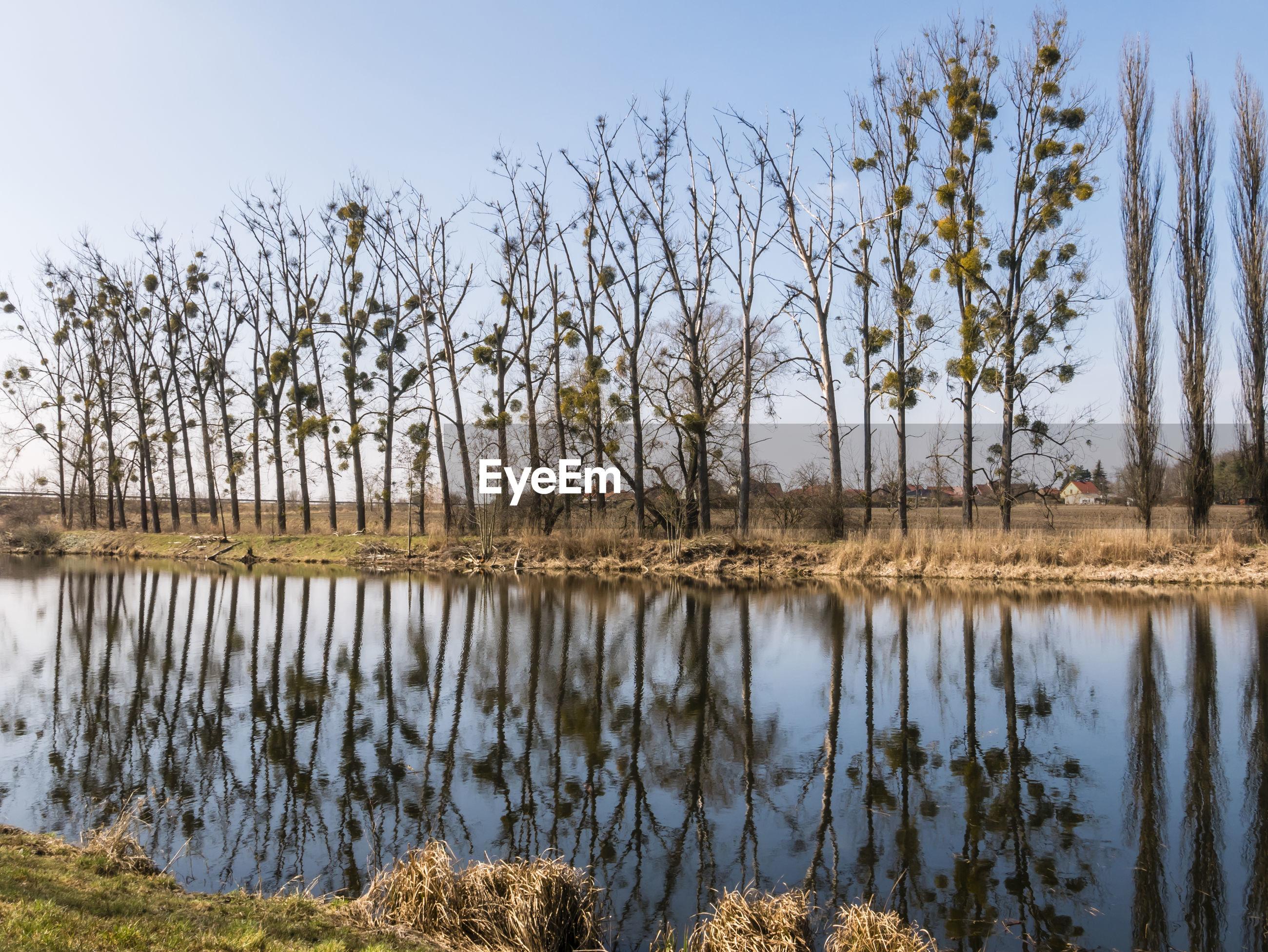BARE TREES IN LAKE AGAINST SKY