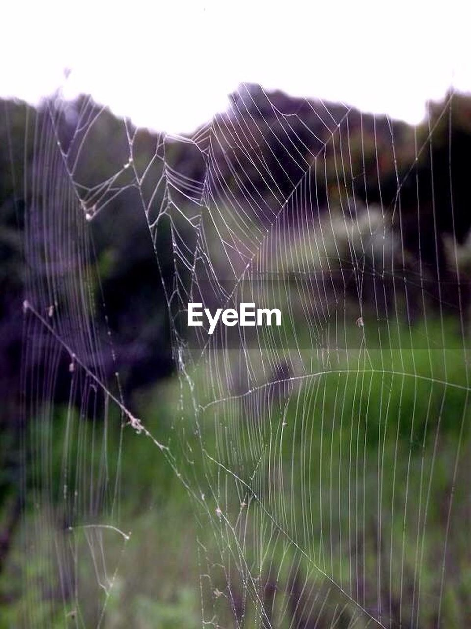 spider web, nature, web, fragility, close-up, outdoors, spider, focus on foreground, weaving, no people, day, beauty in nature, silk, trapped, freshness
