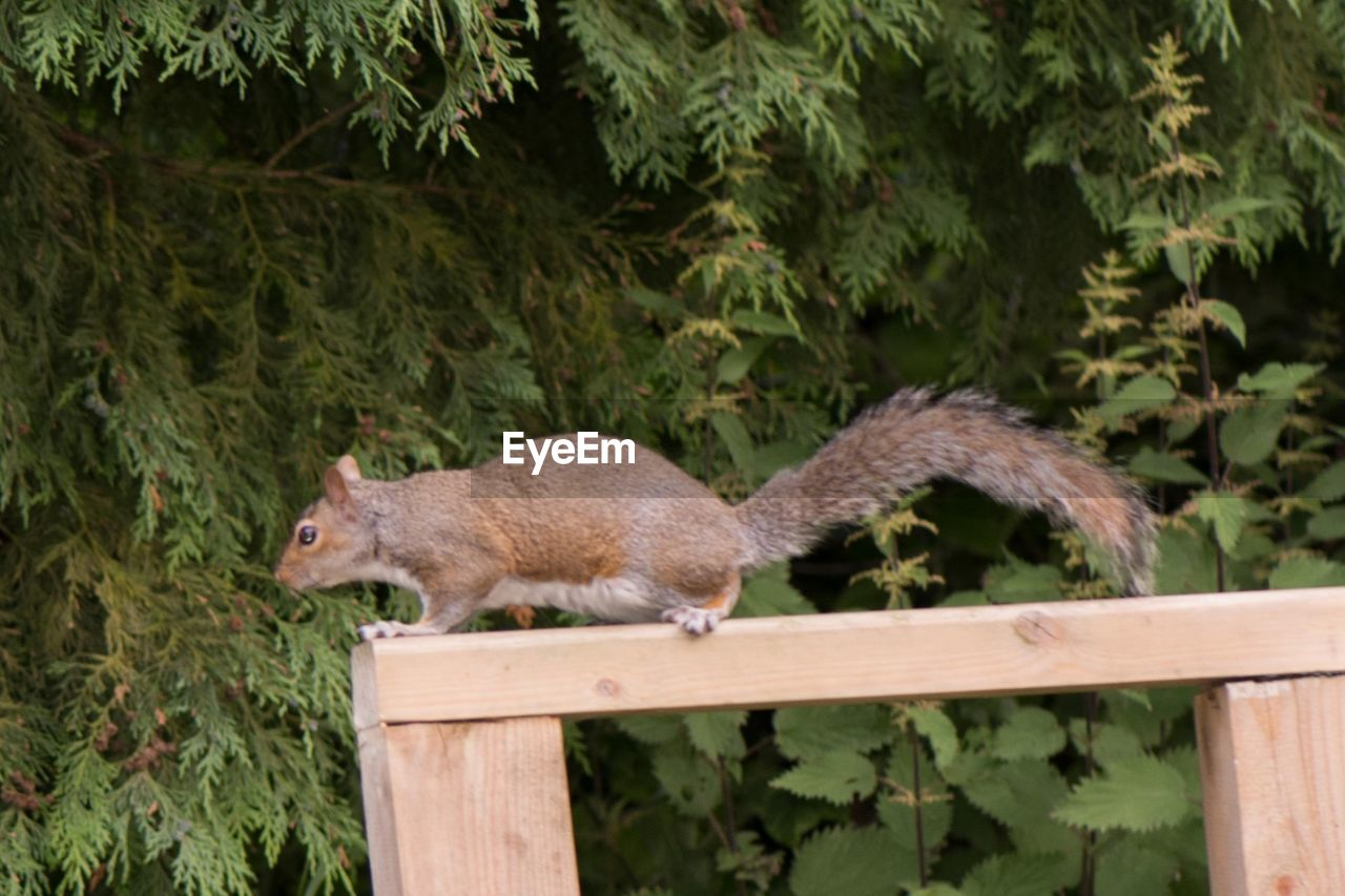 one animal, animals in the wild, animal themes, mammal, outdoors, animal wildlife, nature, no people, day, squirrel, tree