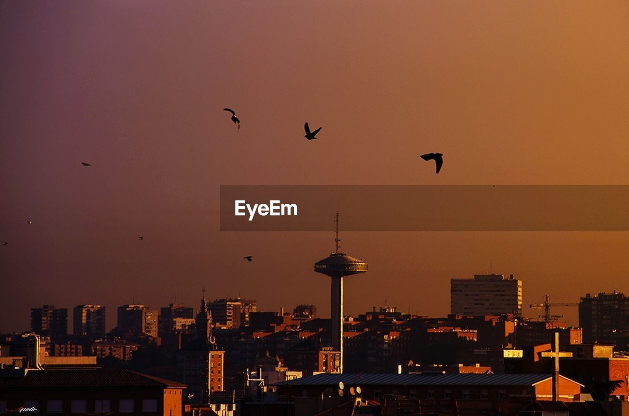 sunset, architecture, built structure, building exterior, flying, bird, city, sky, animals in the wild, no people, silhouette, animal wildlife, outdoors, cityscape, animal themes, mid-air, skyscraper, travel destinations, nature, beauty in nature, urban skyline, day