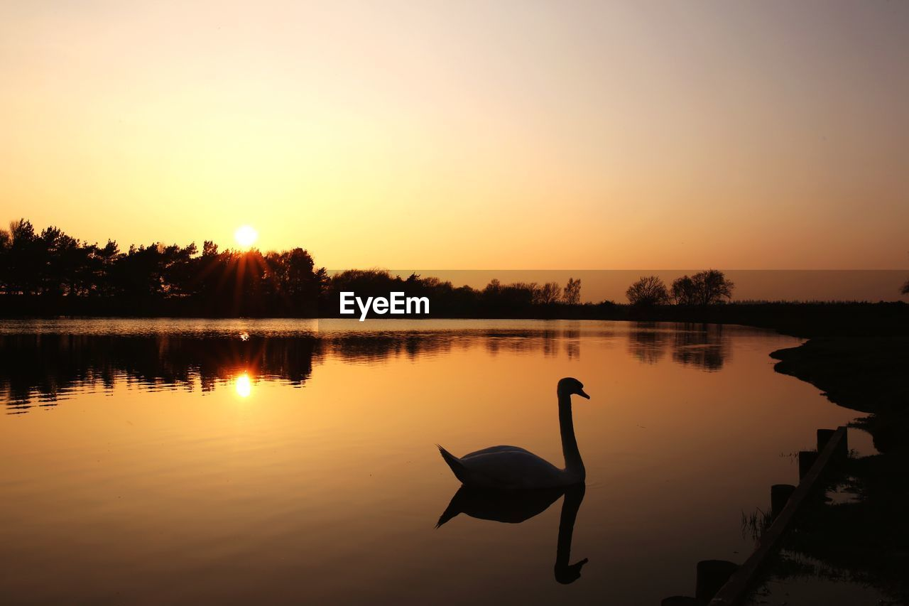 sunset, water, reflection, sky, lake, animals in the wild, bird, vertebrate, animal themes, animal wildlife, animal, scenics - nature, beauty in nature, nature, orange color, silhouette, tranquility, swan, no people, outdoors
