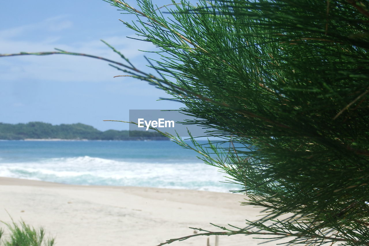 PLANT GROWING ON BEACH AGAINST SKY