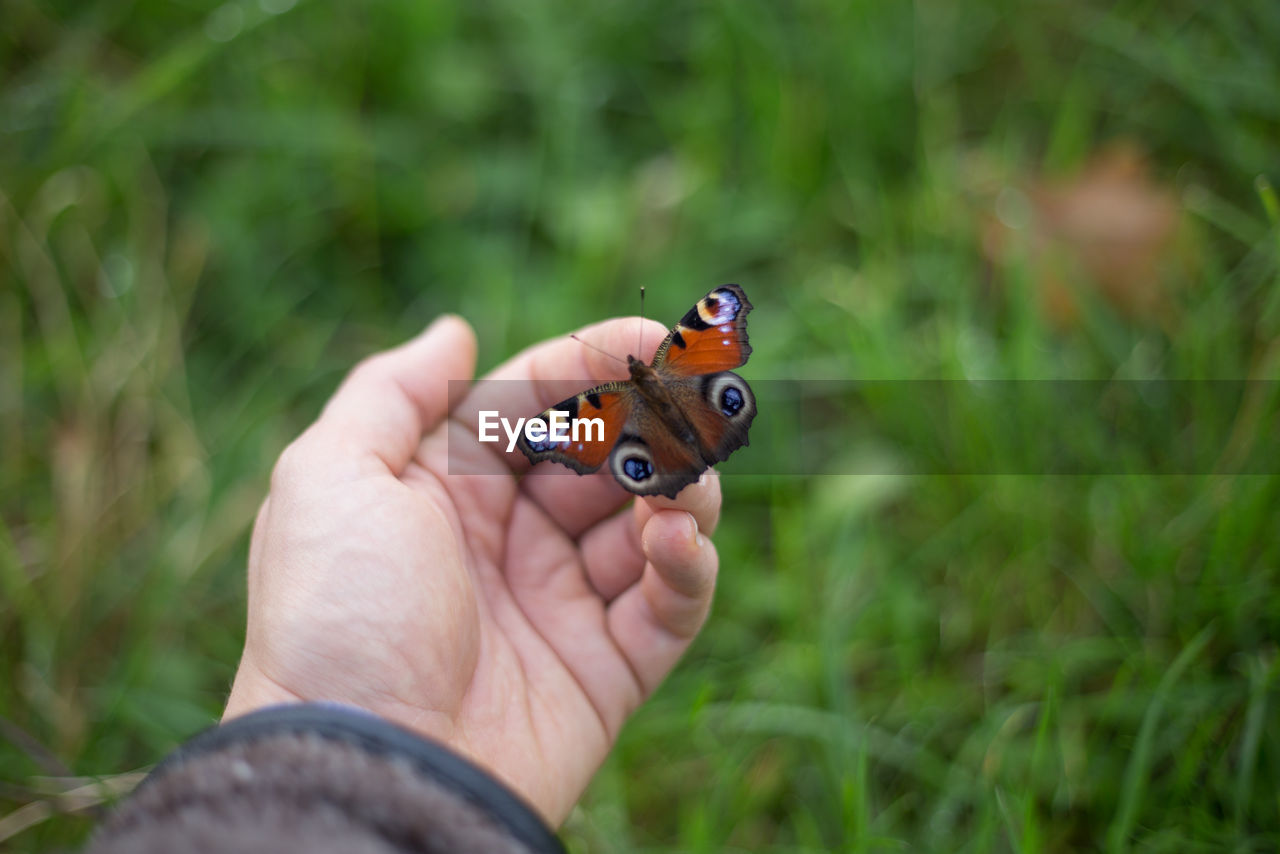 human hand, one person, human body part, real people, outdoors, holding, day, close-up, men, grass, nature, ladybug, people