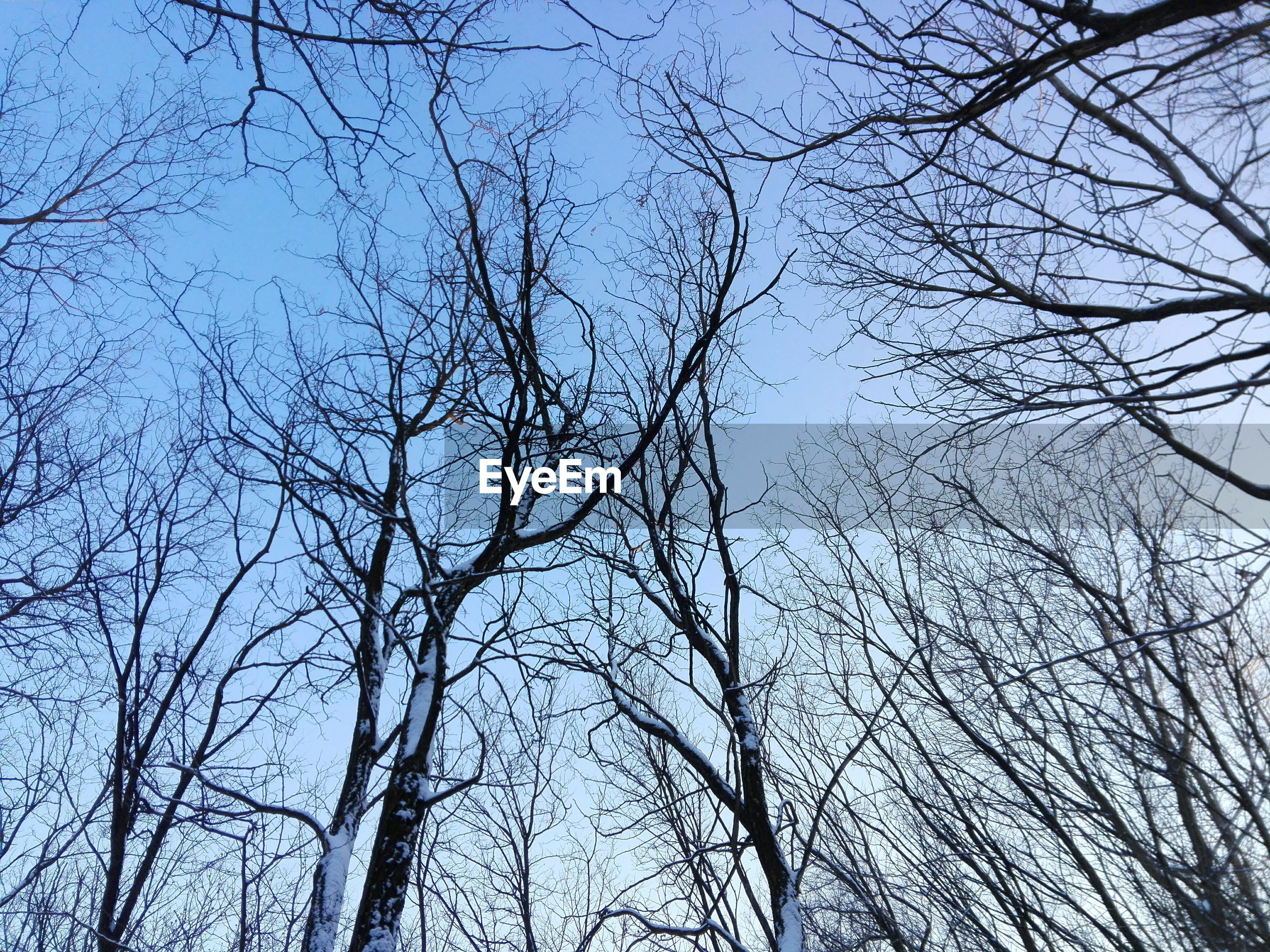 Low angle view of frozen bare trees against clear sky