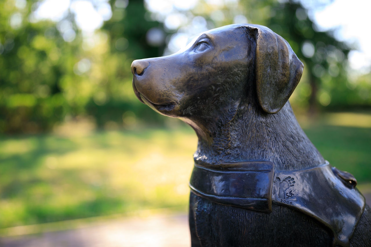 focus on foreground, representation, close-up, sculpture, no people, art and craft, animal representation, statue, day, animal, creativity, metal, mammal, animal themes, one animal, nature, park, craft, outdoors, domestic animals, animal head