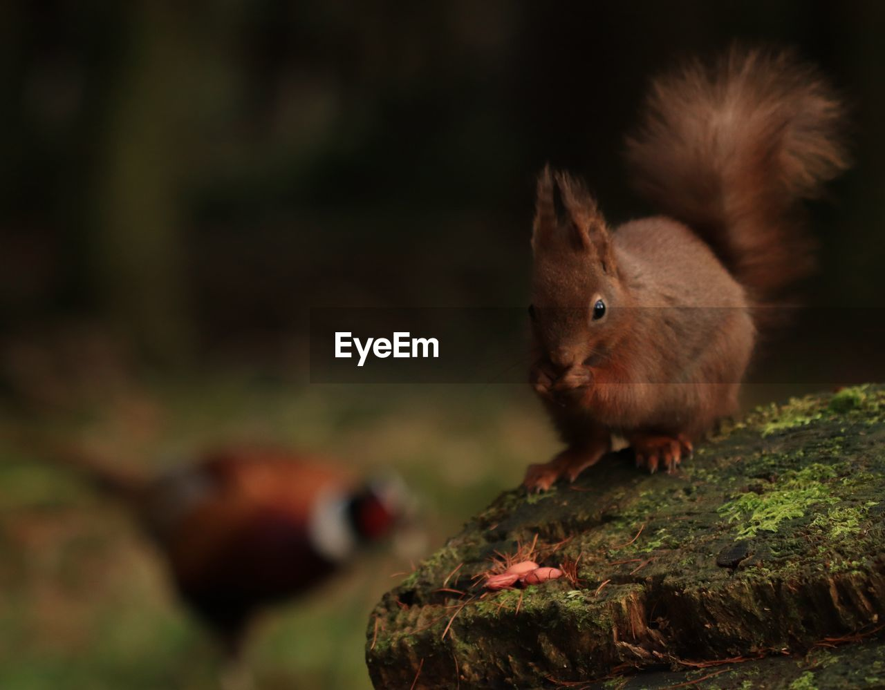 animal, animal themes, mammal, one animal, rodent, animal wildlife, animals in the wild, no people, focus on foreground, close-up, squirrel, vertebrate, day, nature, selective focus, tree, outdoors, land, side view, moss, bark, whisker