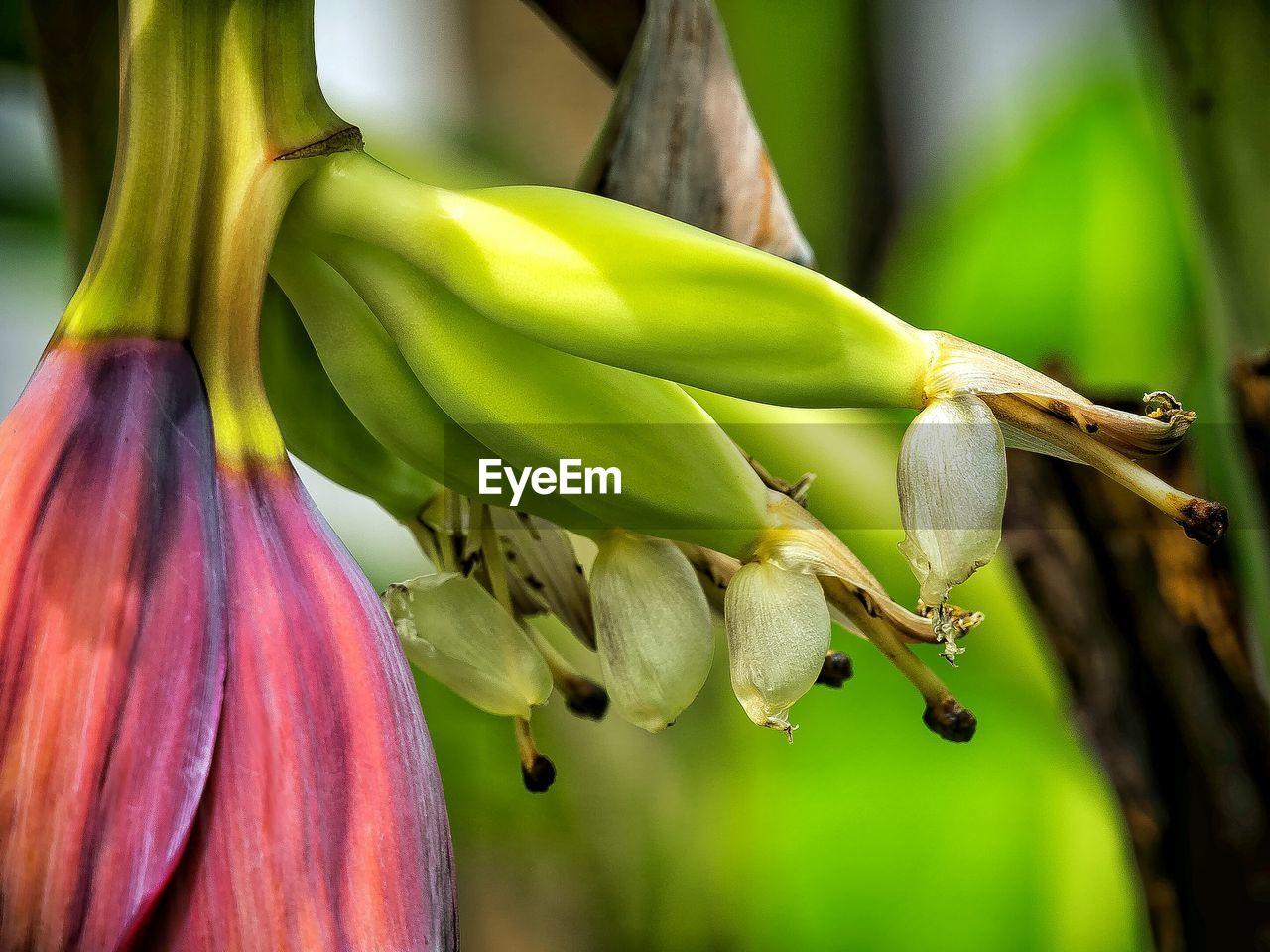 growth, close-up, fruit, freshness, food and drink, no people, green color, day, beauty in nature, nature, flower, plant, outdoors, food, flower head, fragility, tree