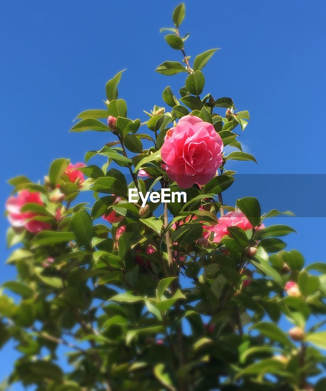 growth, flower, beauty in nature, petal, nature, fragility, low angle view, leaf, plant, no people, blue, freshness, day, outdoors, green color, pink color, sunlight, clear sky, blooming, flower head, sky, close-up