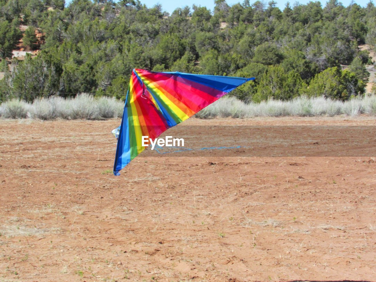 multi colored, tree, day, flag, flying, mid-air, outdoors, growth, no people, nature, sky