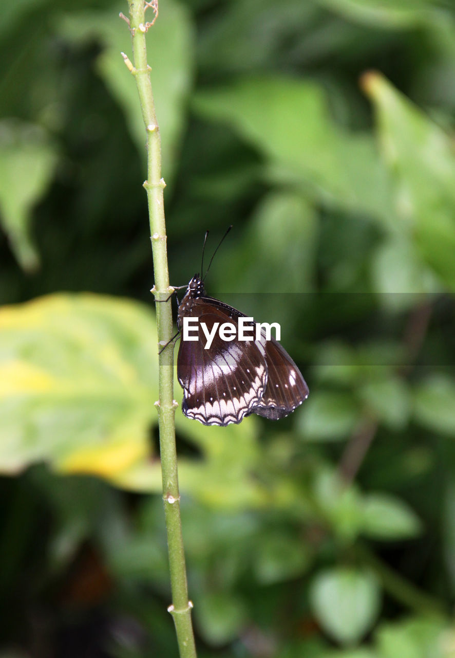 invertebrate, animal wildlife, insect, one animal, animal, animal themes, animals in the wild, plant, close-up, animal wing, beauty in nature, focus on foreground, day, no people, nature, butterfly - insect, flower, growth, green color, plant part, butterfly
