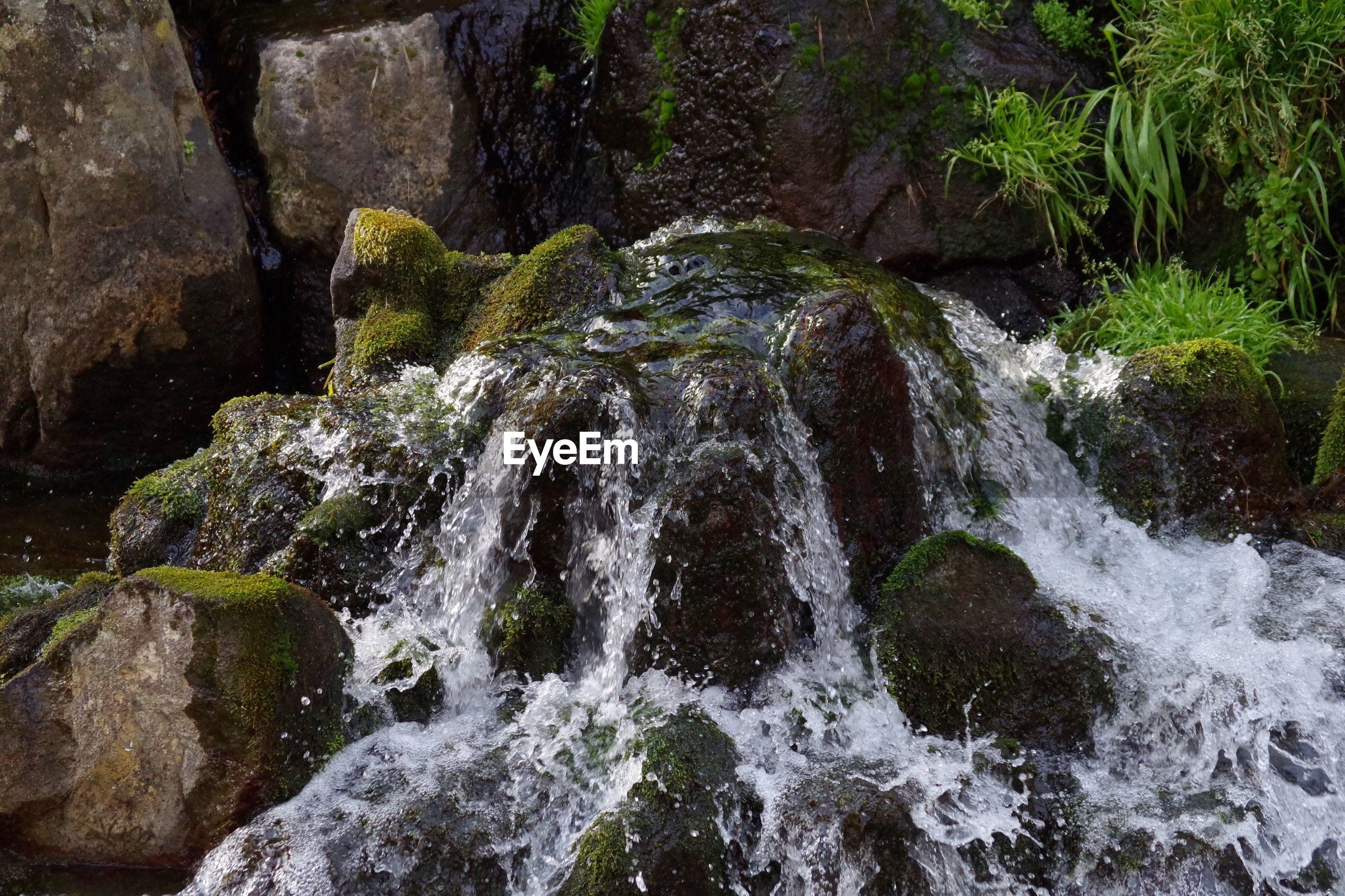 nature, splashing, beauty in nature, motion, waterfall, no people, tree, water, outdoors, day, backgrounds, close-up