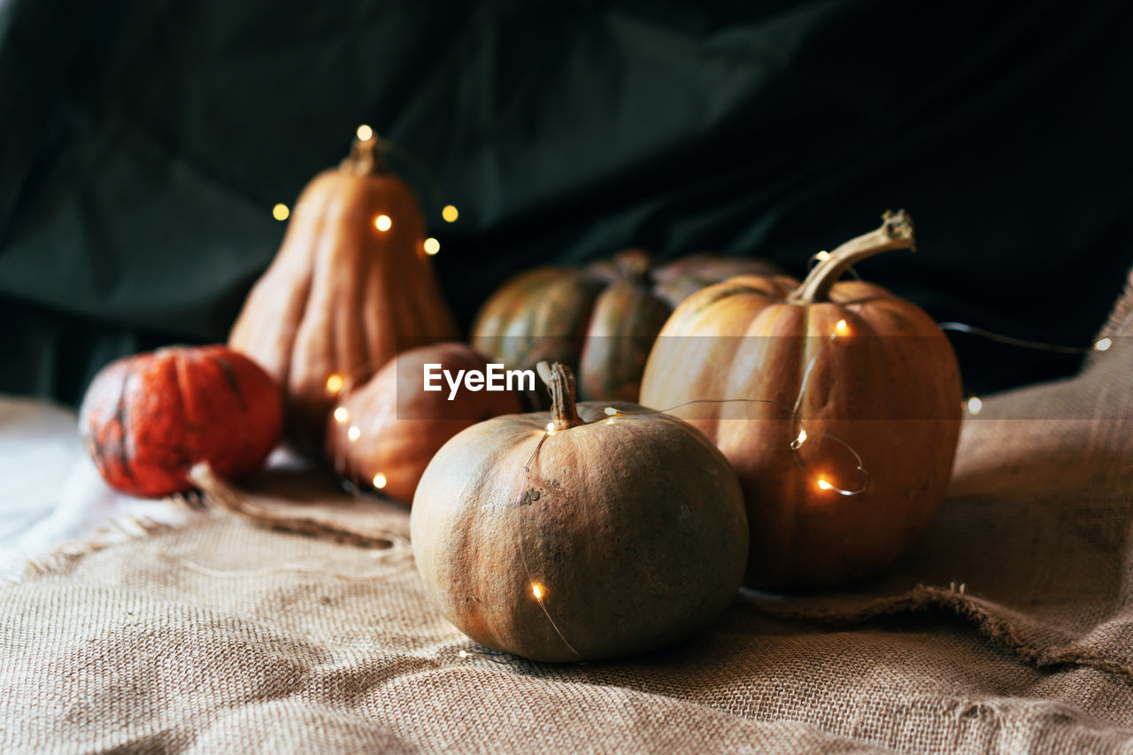 Several large textured ripe pumpkins in a still life with a garland. thanksgiving concept.