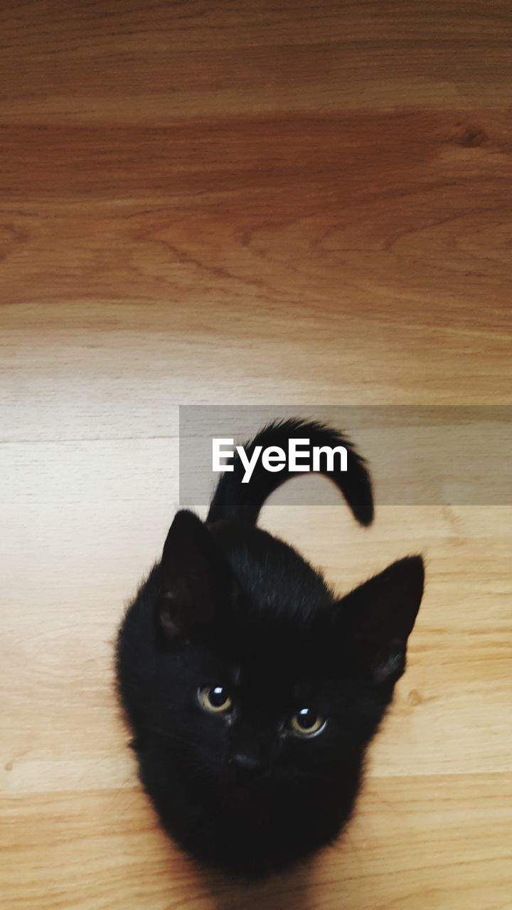 domestic, pets, mammal, domestic animals, animal themes, animal, one animal, cat, feline, domestic cat, vertebrate, black color, indoors, hardwood floor, flooring, wood, no people, wood - material, high angle view, portrait, whisker