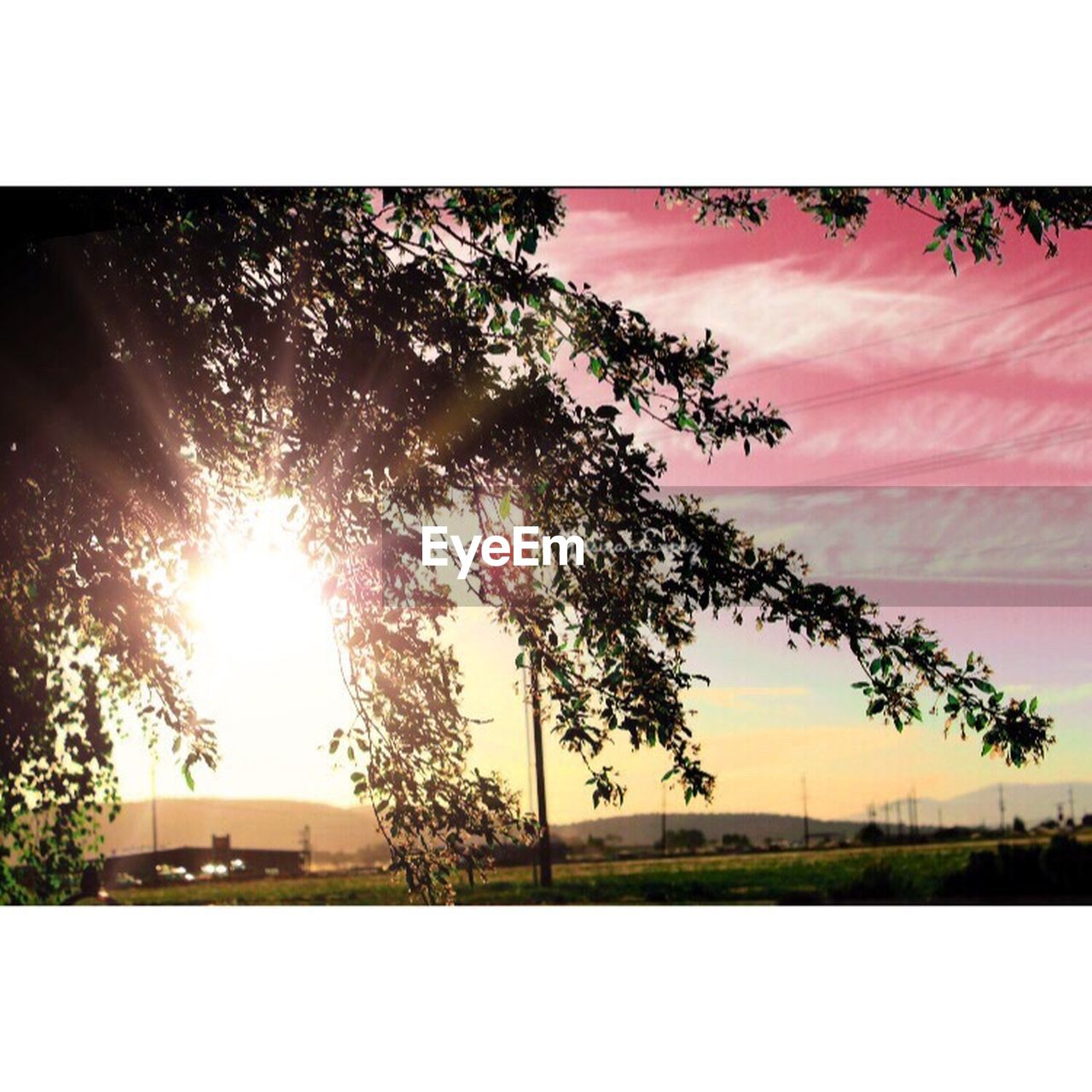 tree, nature, outdoors, no people, sunlight, sunset, tranquility, sun, scenics, day, beauty in nature, growth, branch, sky