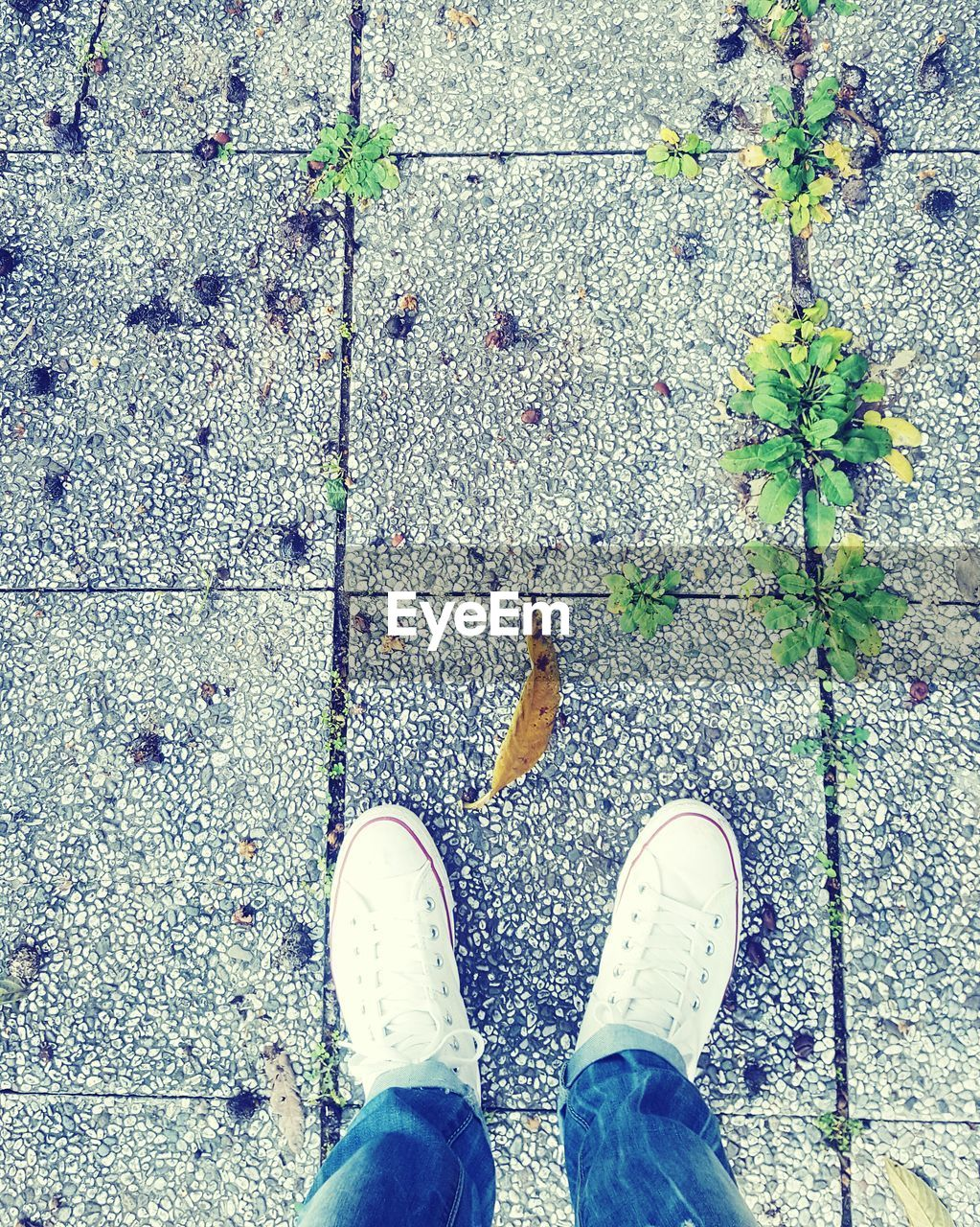 shoe, human leg, personal perspective, low section, high angle view, directly above, day, one person, standing, real people, human body part, outdoors, leaf, men, nature, one man only, people