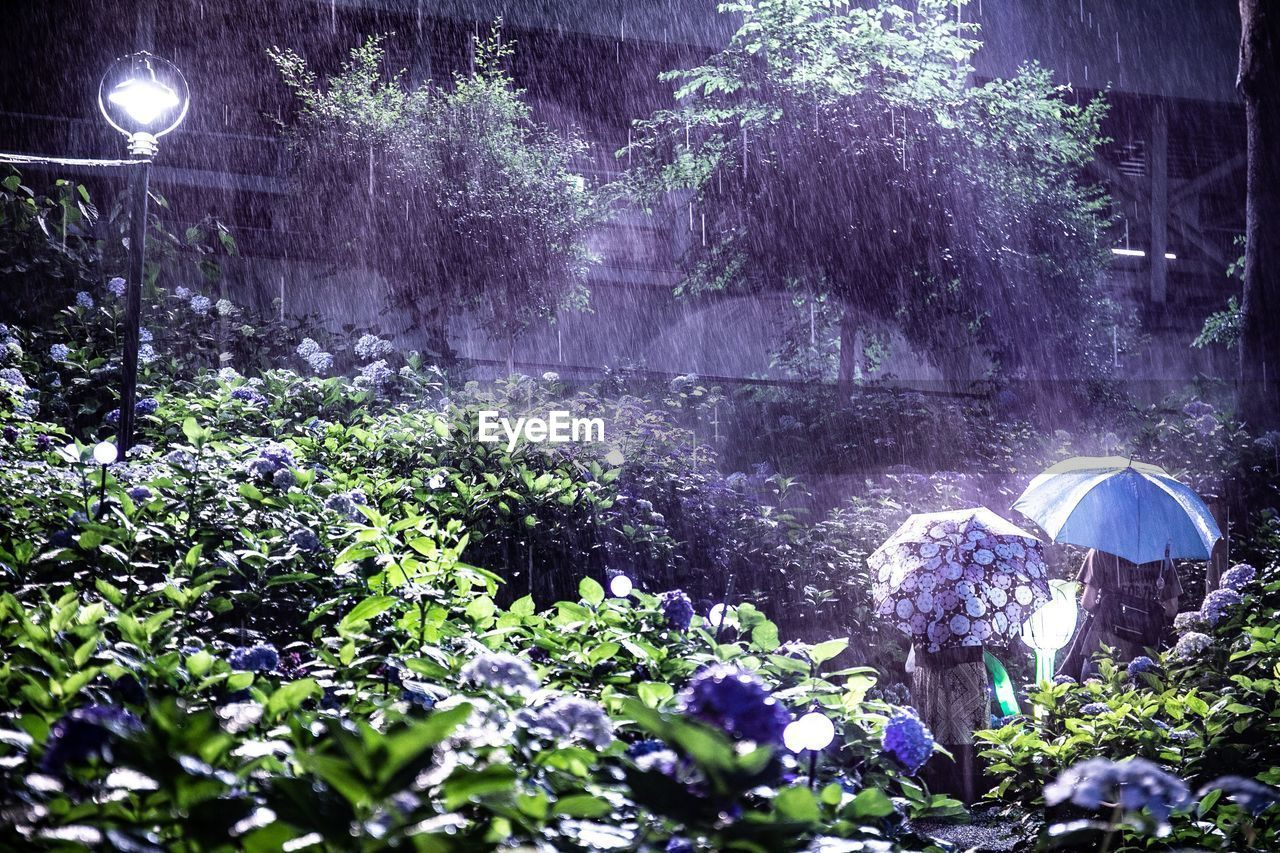 plant, beauty in nature, tree, nature, growth, land, no people, scenics - nature, tranquility, flower, forest, water, outdoors, flowering plant, illuminated, tranquil scene, umbrella, night, purple, rain, flowing water
