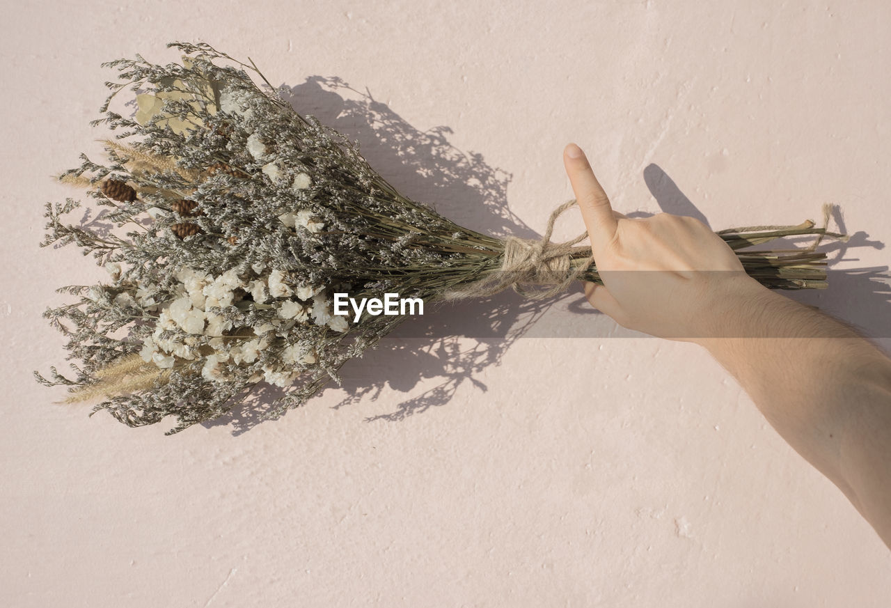 Close-up of person holding flowers against wall