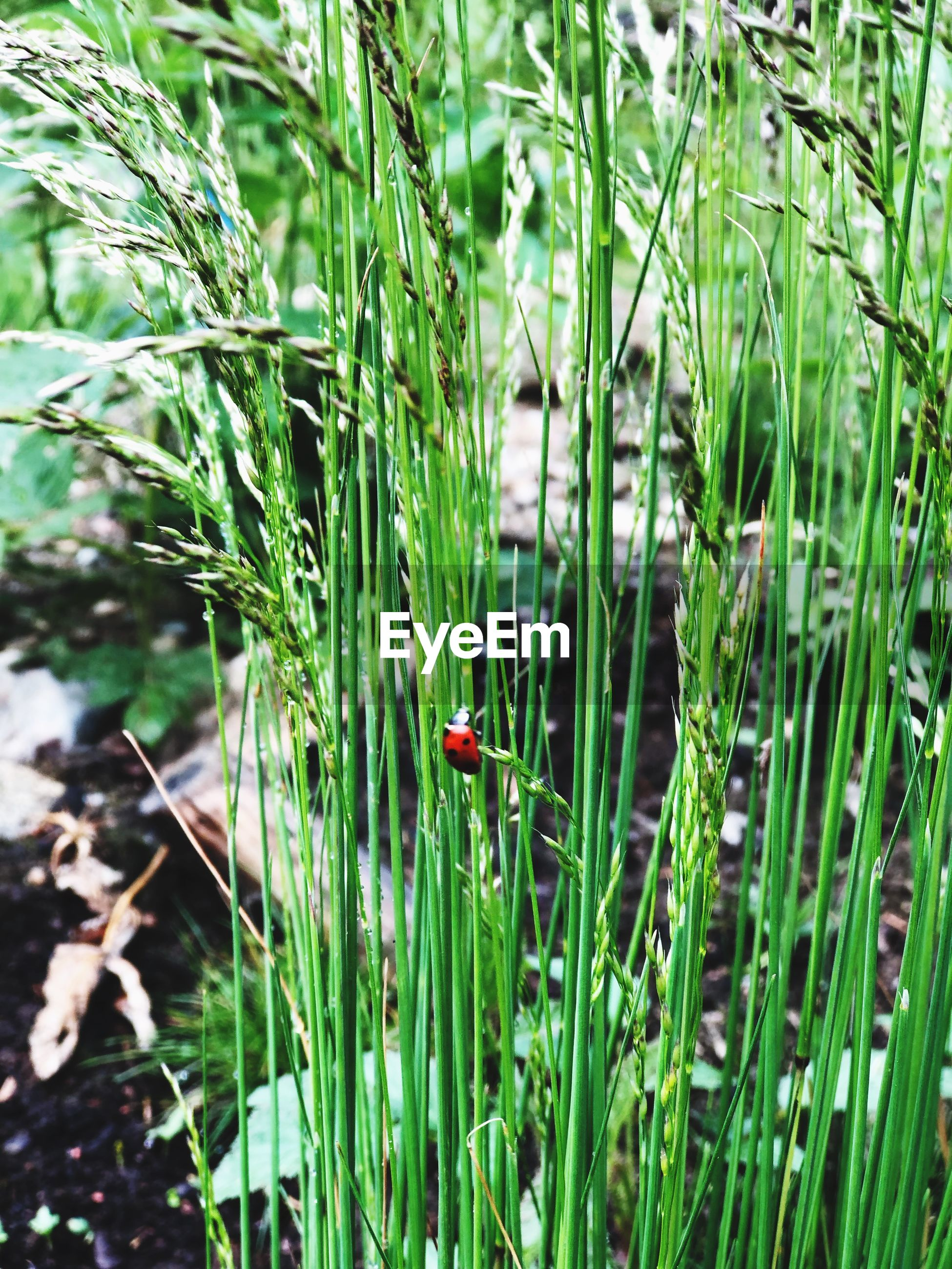 VIEW OF SNAKE ON GRASS