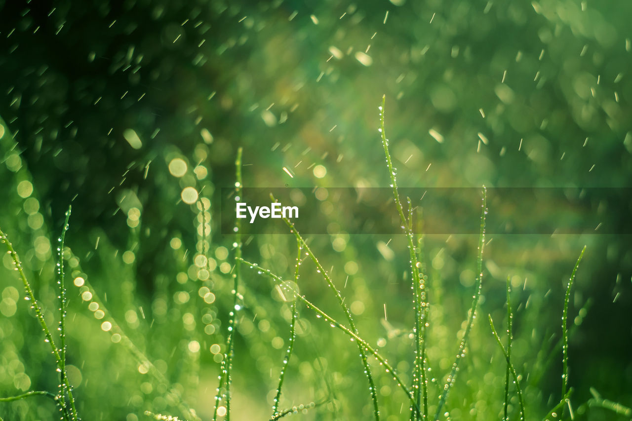 plant, growth, water, drop, beauty in nature, wet, nature, green color, no people, close-up, freshness, day, selective focus, focus on foreground, tranquility, fragility, outdoors, vulnerability, rain, rainy season, dew, blade of grass, raindrop, purity