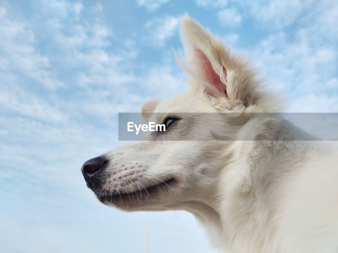 CLOSE-UP OF A DOG LOOKING AWAY AGAINST SKY