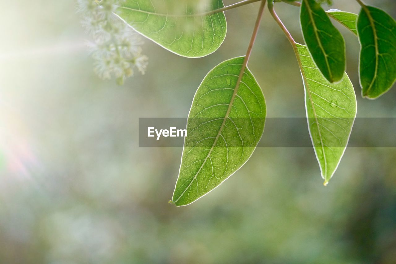 leaf, plant part, plant, green color, close-up, growth, nature, focus on foreground, day, beauty in nature, no people, outdoors, freshness, sunlight, twig, leaf vein, tree, selective focus, leaves, tranquility