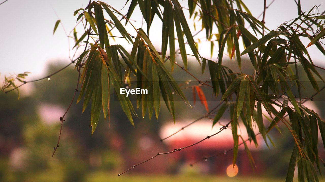 plant, beauty in nature, growth, focus on foreground, nature, close-up, no people, day, tree, tranquility, sky, selective focus, outdoors, branch, plant part, leaf, sunlight, water, wet, green color
