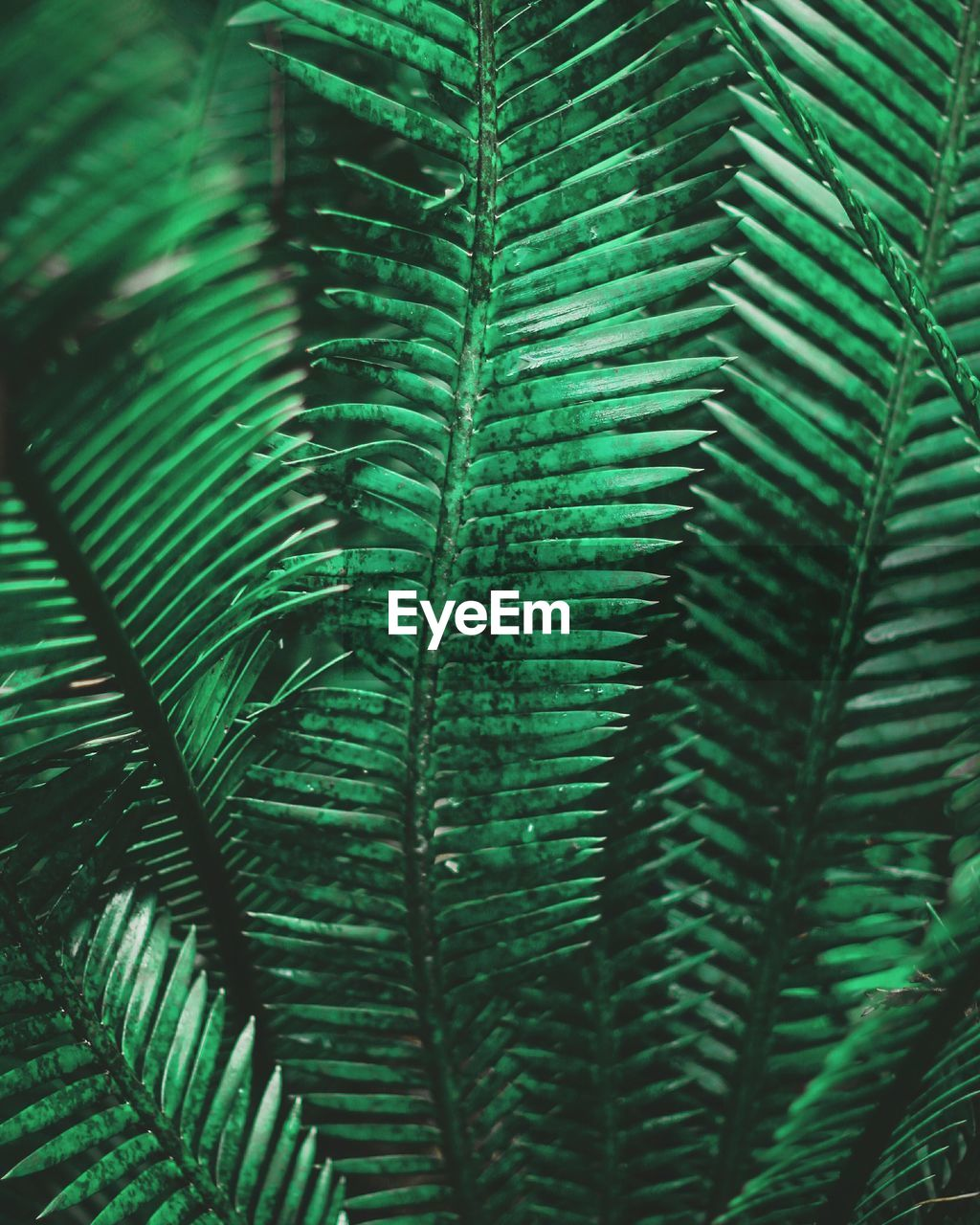 green color, leaf, growth, plant part, plant, fern, nature, close-up, day, no people, beauty in nature, frond, full frame, backgrounds, freshness, tree, palm leaf, palm tree, outdoors, natural pattern, leaves