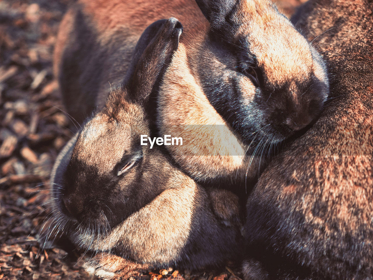 mammal, animal themes, animal, one animal, vertebrate, relaxation, close-up, no people, pets, domestic animals, domestic, sleeping, canine, dog, eyes closed, animal body part, resting, animal head, day, land, napping