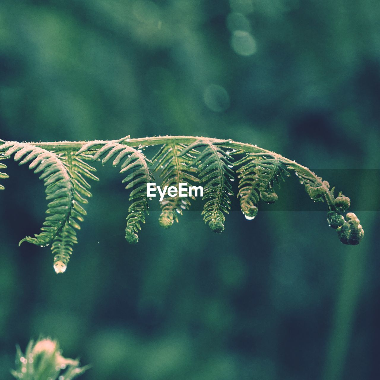 plant, growth, green color, focus on foreground, leaf, plant part, beauty in nature, close-up, no people, day, nature, tree, selective focus, fragility, fern, vulnerability, tranquility, outdoors, branch, freshness, coniferous tree, leaves, pine tree, fir tree