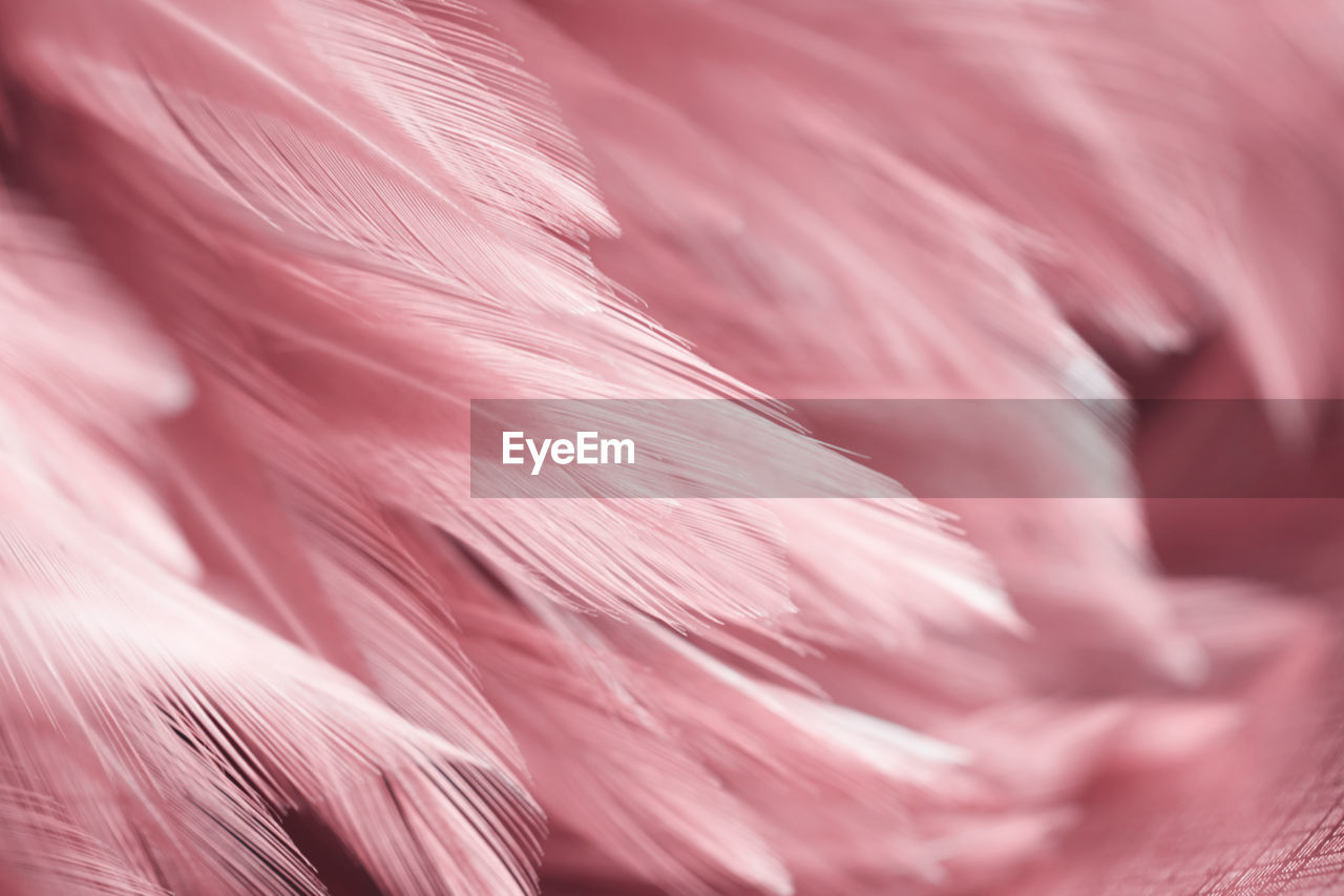 pink color, backgrounds, close-up, full frame, no people, selective focus, softness, textile, pattern, indoors, freshness, still life, fragility, textured, vulnerability, large group of objects, extreme close-up, red, beauty in nature, feather, flower, vegetarian food