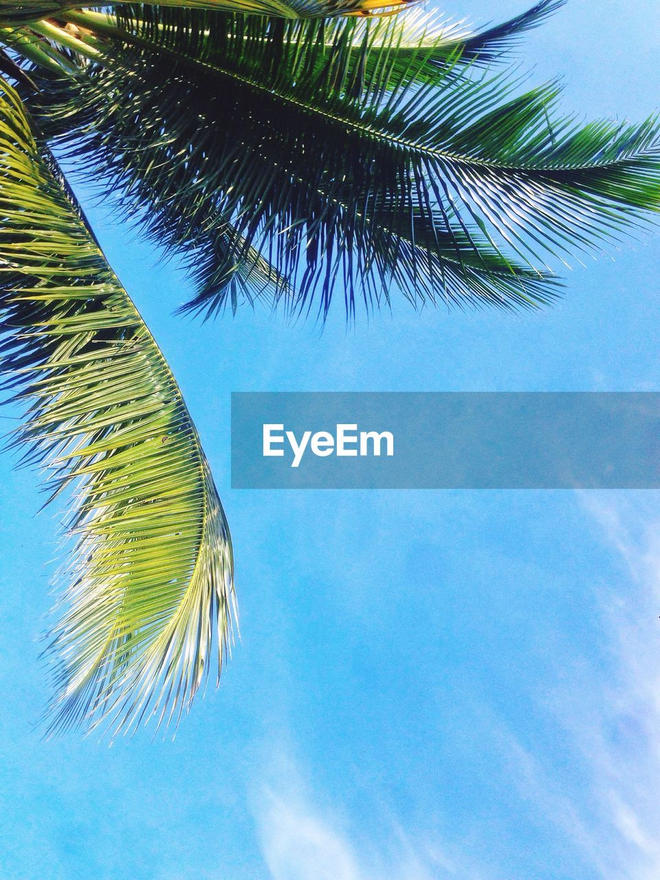 palm tree, tree, low angle view, blue, sky, palm frond, no people, day, nature, beauty in nature, growth, outdoors, green color, tranquility, scenics, close-up