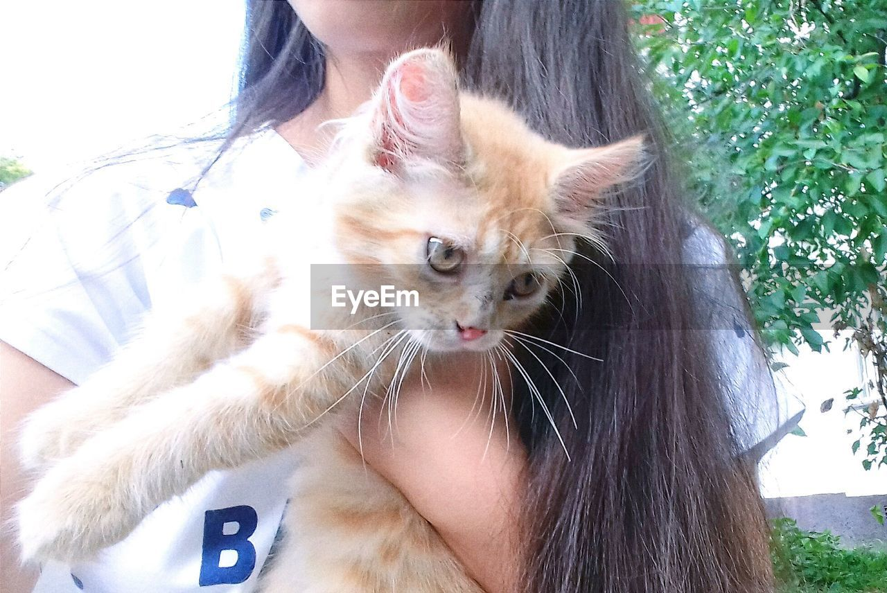 domestic cat, pets, feline, domestic animals, mammal, one animal, one person, real people, animal themes, lifestyles, young adult, indoors, day, young women, close-up, persian cat, adult, people