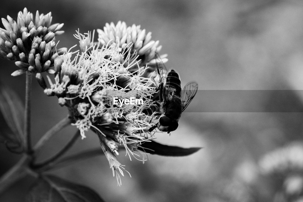 flower, plant, flowering plant, beauty in nature, close-up, focus on foreground, growth, freshness, invertebrate, animals in the wild, insect, animal wildlife, fragility, animal themes, one animal, nature, flower head, vulnerability, animal, day, no people, pollination, outdoors, wilted plant